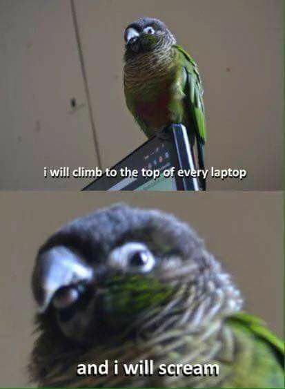 Bird Of Paradise Plant Care 2 Birds Tattoo Bird Theme Classroom Love Birds Chirping Funny Parrots Funny Birds Cute Funny Animals