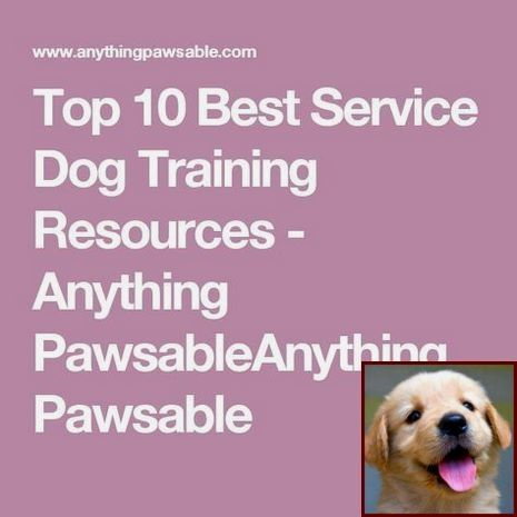 House Training A Puppy Uk And Dog Training Programs Near Me Dog