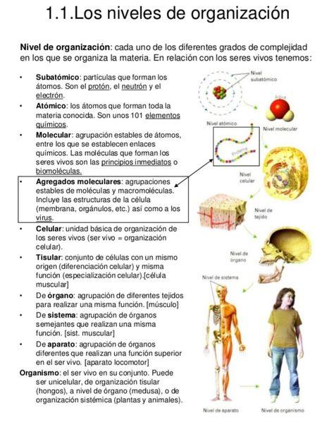 260 Ideas De Anatomia Y Fisiologia Anatomia Y Fisiologia Fisiología Anatomía