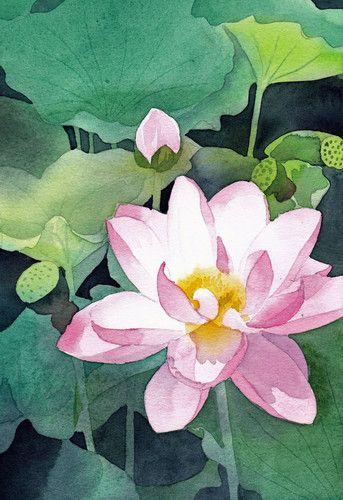 透明水彩 花 植物 Flower Plant おしゃれまとめの人気アイデア Pinterest 杰 林 ハスの花 花 花 イラスト