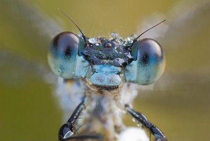 Photo D Insecte Et Rosee Insectes Mouilles Insectes Sous La