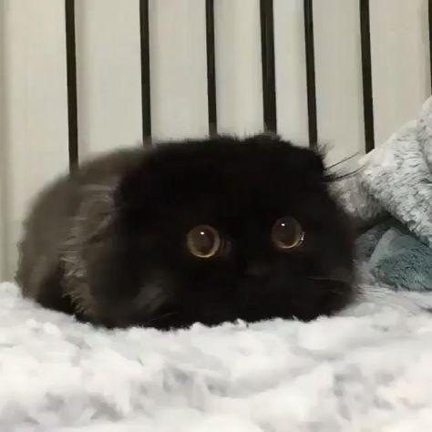 Hunting Mode Cat
