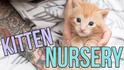 Kitten Nursery In Austin Tx Youtube Kitten Season
