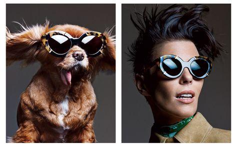 b51c2f4c4f9 Canine Instagram Star Toast Is the New Face of Karen Walker Eyewear  InStyle