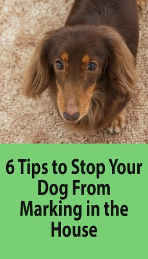 Learn How To Stop A Dog From Marking Dog Pooping In House Dogs