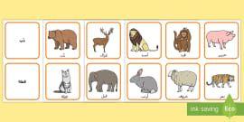 بساط مفردات دورة حياة الفراشة Coloring Download Curriculum