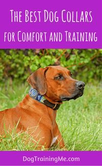 Pin By Dan On Puppy Training For Beginners Wide Dog Collars