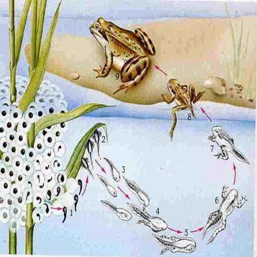 Fruehling Am Tuempel Frosch Und Krote Frosch Spiel Frosch