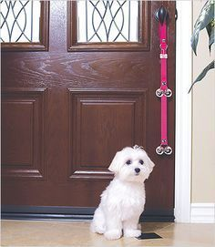 Potty Training Your Puppy In A Few Easy Steps Training Your
