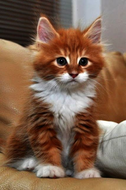 Ahh Cats And Kittens Meowing Video Super Cute Cats Kittens
