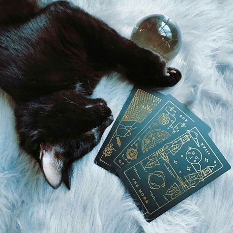 New Eclectic witch ~ Capricorn ~ Tarot and crystal lover ~ ask me things! Wiccan, Magick, Bastet, Under Your Spell, Witch Cat, Modern Witch, Witch Aesthetic, Black Cat Aesthetic, Aesthetic Fashion
