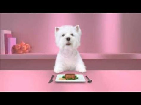 I Found The Dog In This Commercial Utterly Cute Guess It Was