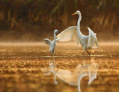 Come usare al meglio la luce naturale nella fotografia naturalistica