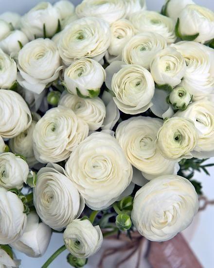 Ranunculus White In 2020 White Ranunculus Ranunculus Bulb Flowers