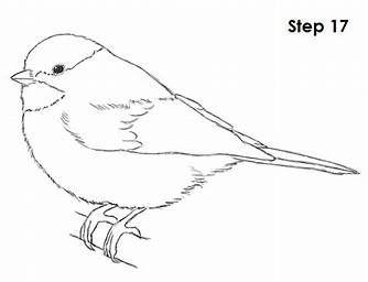 Pin Von Sune Czogalla Auf Tutorials Vogel Malvorlagen Vogelumriss Vogel Zeichnen
