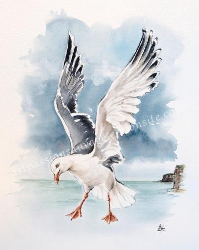 Mouette En Vol Animaux D Aquarelle Peintures Animalieres
