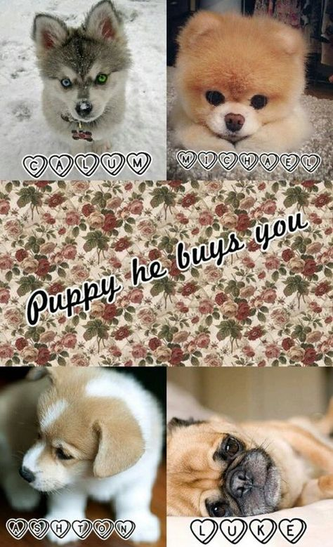 Puppy he buys you. 5SOS preferences