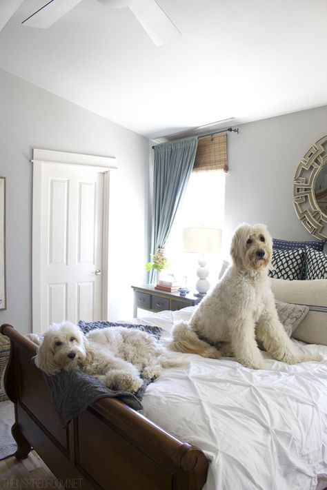 Cozy Fall Bedroom - Jack the Goldendoodle and Lily the Australian Labradoodle