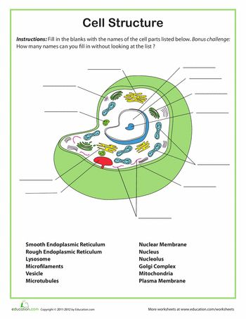 Cell Structure | Cells, Cells, Cells | Science worksheets, Science ...
