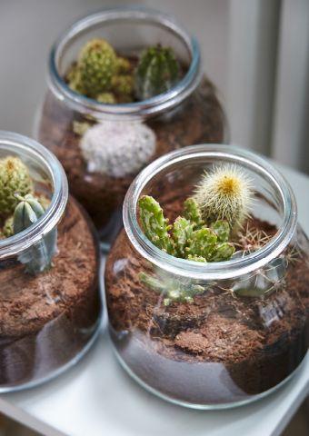 Créez des mini-terrariums dans des bocaux transparents pour un décor de verdure zéro tracas