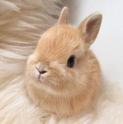 Cute Animals Pics For Whatsapp Dp Cute Baby Bunnies Cute Baby