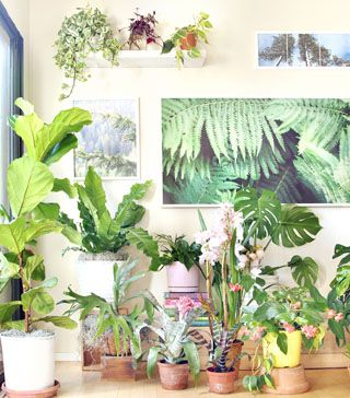 18 Most Beautiful Indoor Plants ( & 5 Easy Care Tips! )