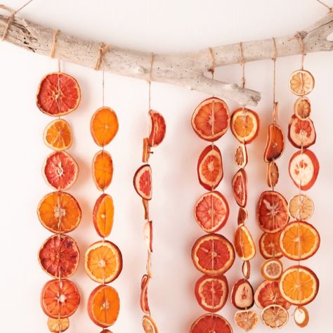 Orange you glad you saved your citrus for a craft like this? Allow citrus to dry out completely to avoid rotting!