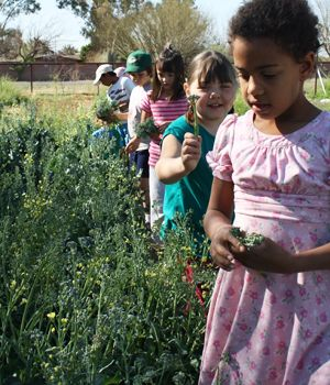 7 best Specialty Subjects images on Pinterest | Tucson, Photo credit and  Waldorf education
