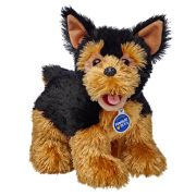 Terrier Yorki Yorkshire Terrier Hund Yorkshire Terrier Hundeverhalten