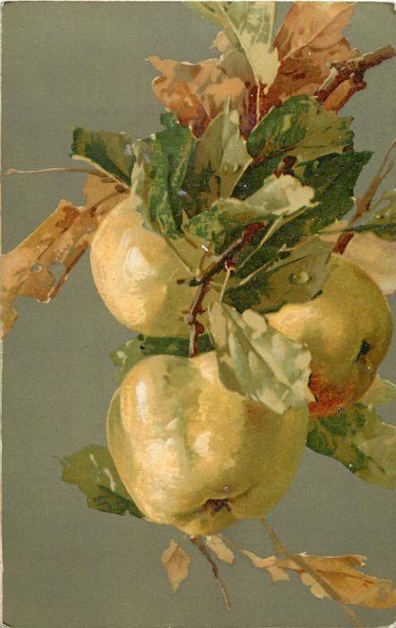 Apples by C. Klein
