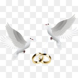 Dove Inlay Ring Tattoo Wedding Rings Wedding Cards Wedding Silhouette