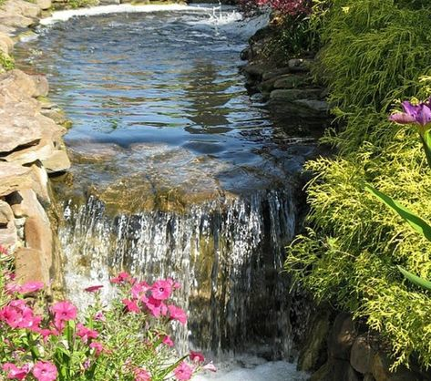 Pin Op Bassin De Jardin