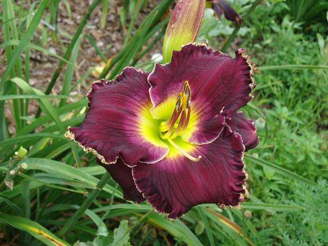 13ca80ef4397e2013818dfb7890cb71d  johnny cash black - Kaos Wife And The Black Gardeners Part 3