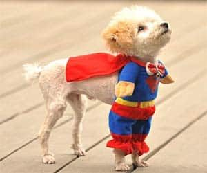 Have your very own Superpet with this awesome Superman pet costume! They'll look adorable at fancy dress parties and Halloween! Different sizes available.