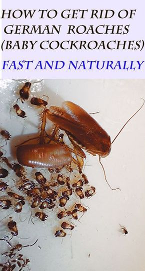 10 Unfailing Natural Ways To Get Rid Of German Roaches Baby
