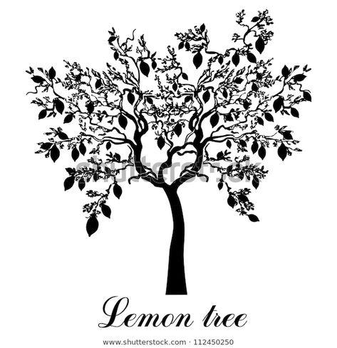 Descubra Lemon Tree Isolated On White Background imágenes de stock en HD y millones de otras fotos, ilustraciones y vectores en stock libres de regalías en la colección de Shutterstock.  Se agregan miles de imágenes nuevas de alta calidad todos los días.