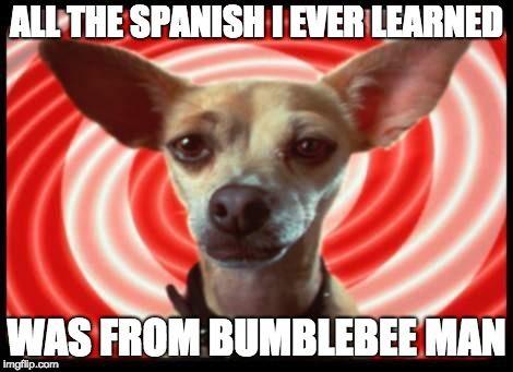 Taco Bell Dog Chihuahua Chihuahua Love Chihuahua Owner