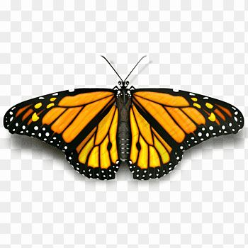Coloring Pages Monarch Butterfly Lovely Page 14 Butterfly Yellow Cutout Png Clip Valentines Day Coloring Page Valentines Day Coloring Butterfly Coloring Page