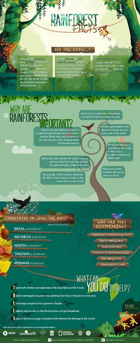Rainforest Facts from Oak Furniture UK: http://www.greenerideal.com/science/0423-rainforest-facts-infographic/ #rainforest