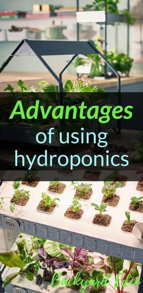 Advantages of using hydroponics | Hydroponics | DIY