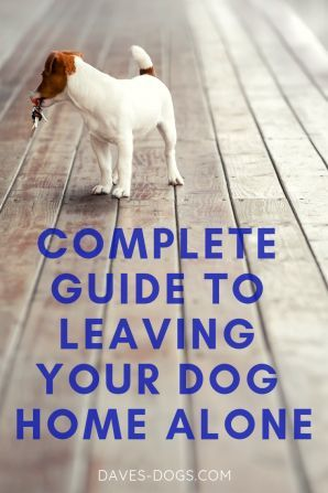 Complete Guide To Leaving Your Dog Home Alone Dog Training Your