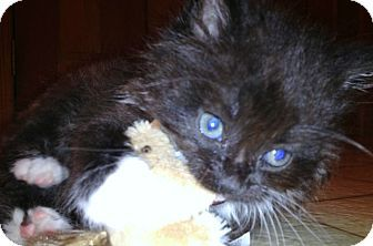 Meow! My name is ZCourtesy-BOND007