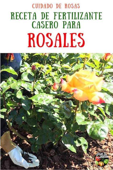 Como Preparar Abono Casero Para Rosas Y Como Fertilizar Las Rosas Cosas Del Jardin Cultivo De Plantas Abono Natural Para Plantas Jardinería Hidropónica