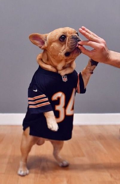 Raise Your Paw If You Want To Fast Forward To Next Season Dabears