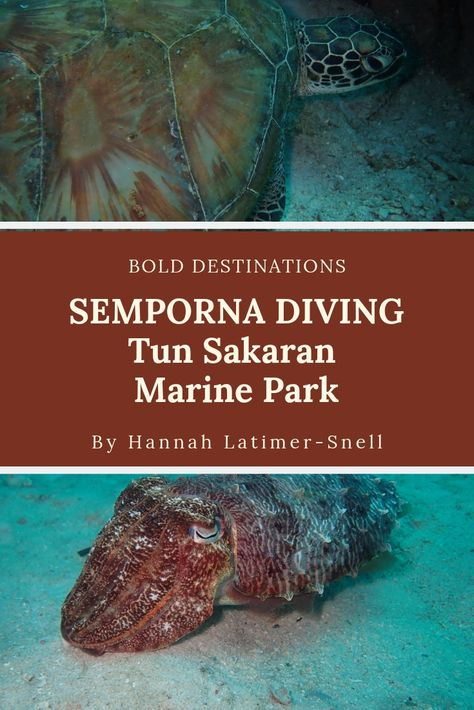 #Borneo is filled with fabulous dive sites. The best, however is the #TunSakaranMarinePark.  Learn about where and how to go diving in this spectacular locations and more!   #scubadiving #ScubaJunkie #mabul #sipidan #spectaculardiving #bestdivesites #sempornaislands #sempornaborneo #divinginsabah #divinginborneo #divinginsemporna #diving #girlsthatscuba #womenwhodive #sheisnotlost #femalescubadivers #femaledivers #femaleexplorers #femaleblogger #travelborneo #travelsabah