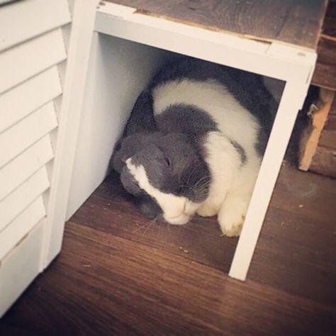 Selbstgebauter Kaninchenauslauf Fur Die Wohnung Kaninchenauslauf Kaninchen Kaninchenkafig