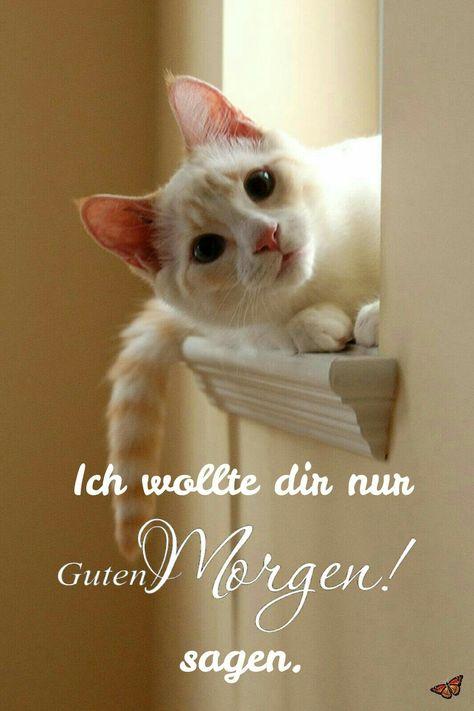 Morgenalle Schon Wach Guten Morgen Hübsche Katzen