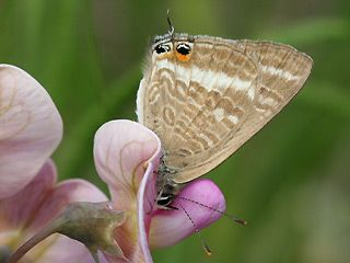 Die Schonsten Schmetterlinge Und Raupen Aus Sudeuropa Schmetterling Raupe Griechenland Italien Sudfrankreich Spanien Port Turkei Kroatien Kroatien Griechenland