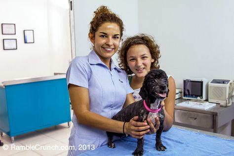 The Best Vet In Lake Chapala Pet Place Animal Hospital Animal