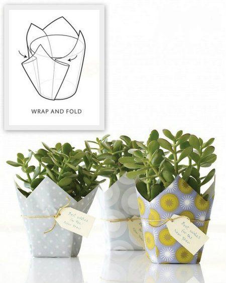wrap a plant